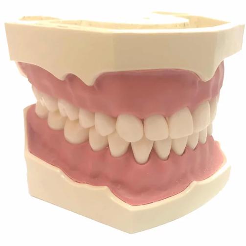 Стоматологічна модель AG-3 28
