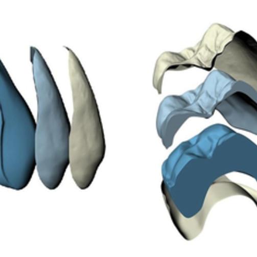 Штучні зуби artegral life